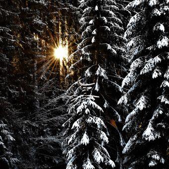 Průsvitný les