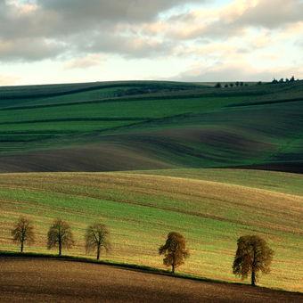 krajina s kaštany (Slovácko)