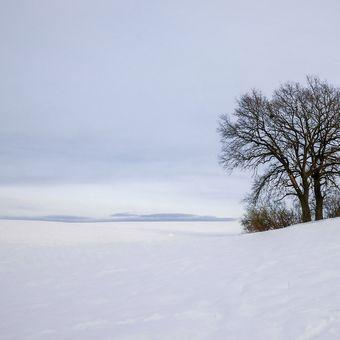 Dva v zasněžené krajině....