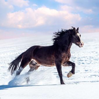 Happy a jeho sněhové dovádění