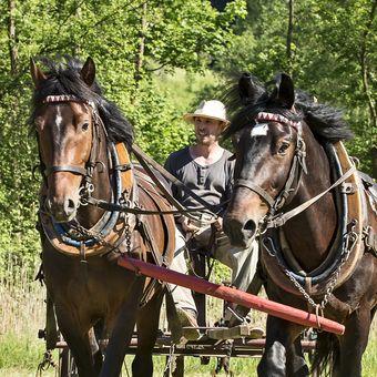 Ze života na vesnici v Podještědí - senoseč