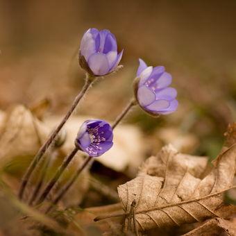 Jaro se pomalu probouzí