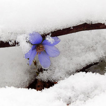 Zasněžené jaro
