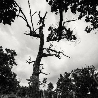 Lesní hlídač