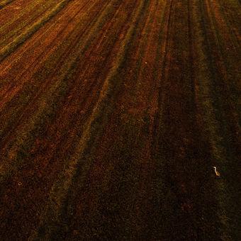 Osamělá Volavka popelavá při východu slunce