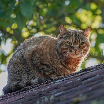 Máša na střeše