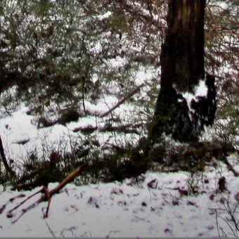 zima v lese II
