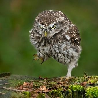 angry birds v českém lese