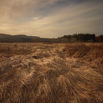 travnaté šumavské pláně