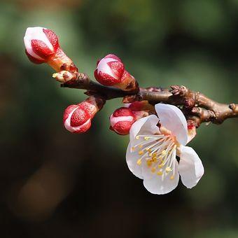 Stromy kvetou