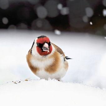 A sněží a sněží...