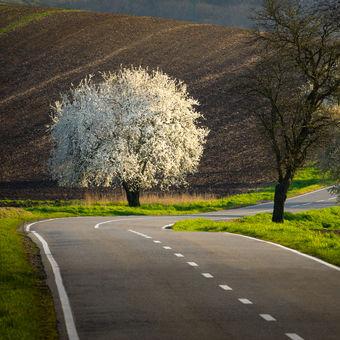 Cesta k jaru