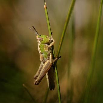 Kobylka a končící den