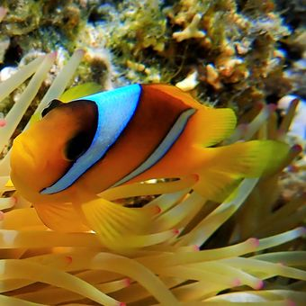 Našel se Nemo