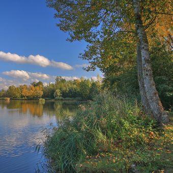 Dubnický rybník
