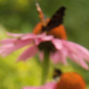 motýlkov II