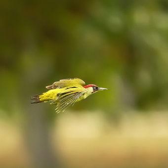 Letící šíp ...
