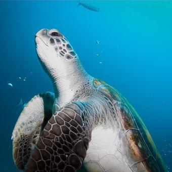 Vysmátá želva