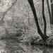 Lužní les XXXVI - Přírodní rezervace Rezavka