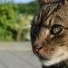 Kočičí pohled.