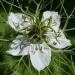Květinový kolotoč