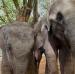 Sloní bratři