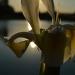 Světelný obrys mravence