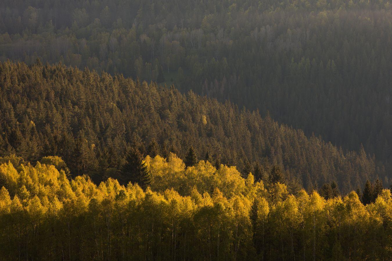první paprsky v korunách stromů