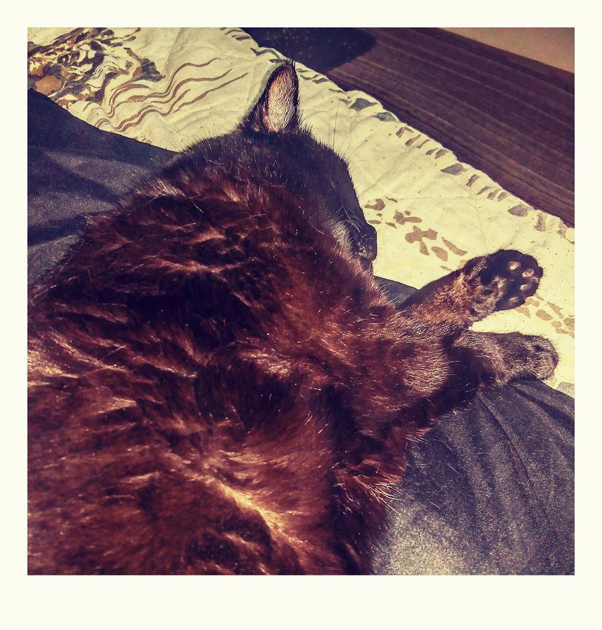 Violka ležící, spící