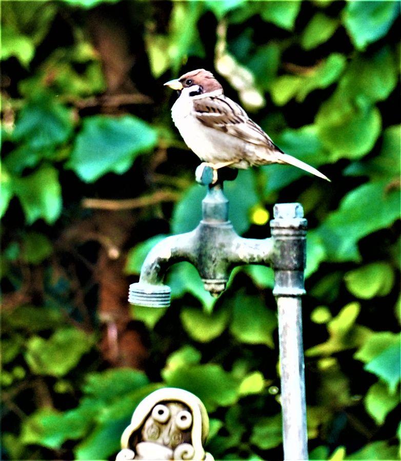 Pustíš vodu, vrabčáku?