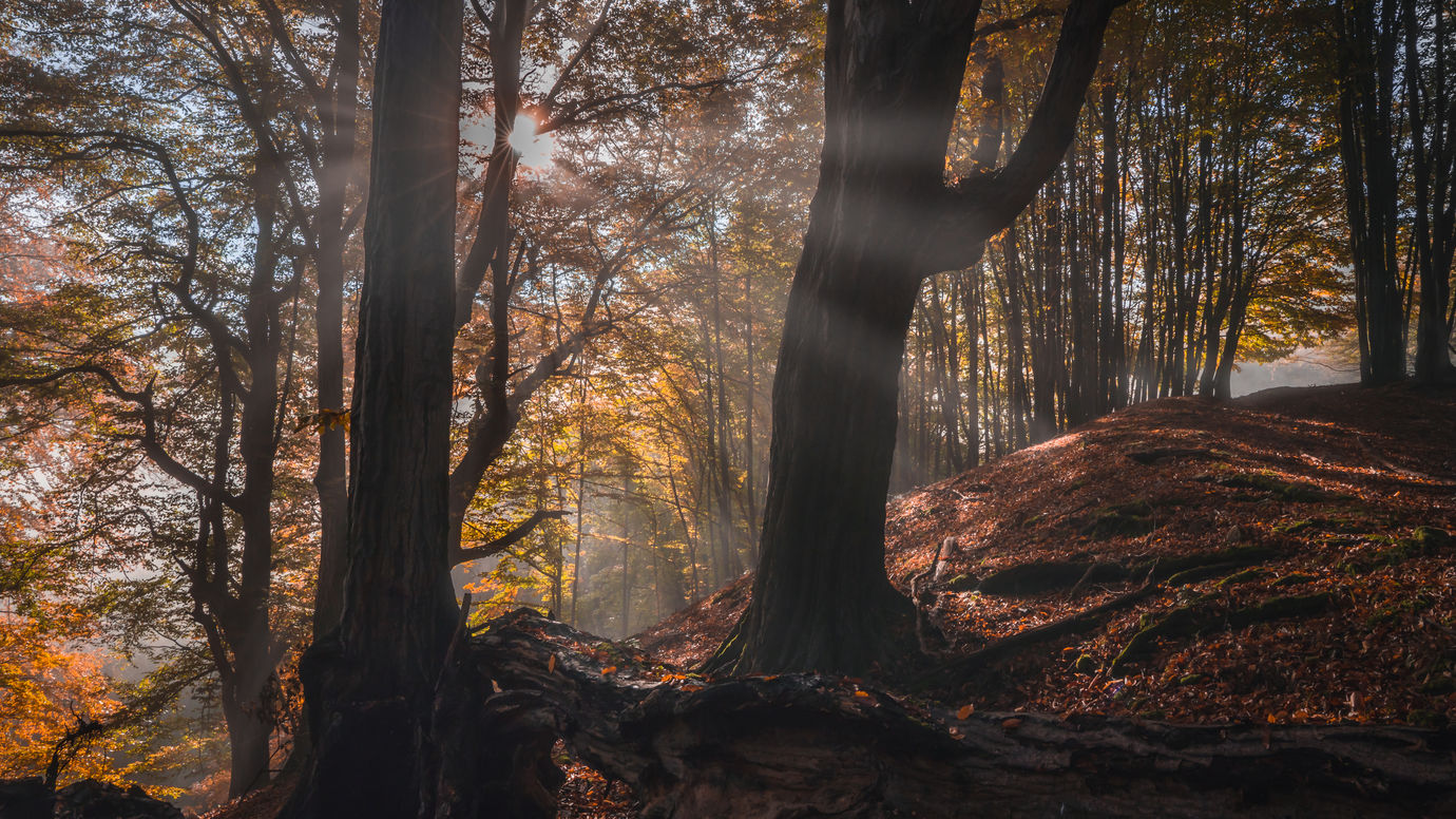 Ráno v Hukvaldském lese
