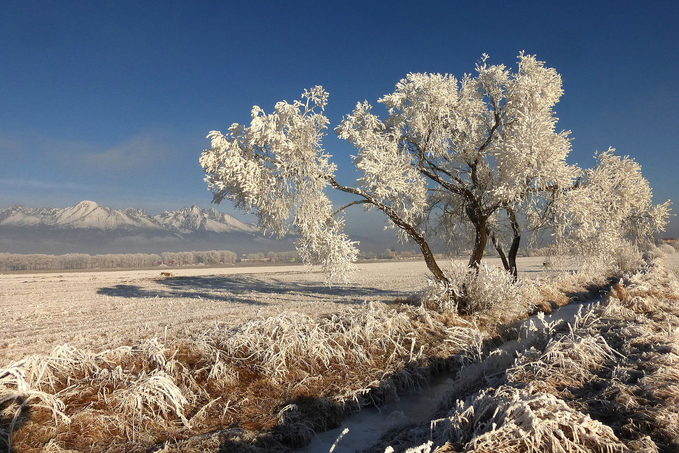 Zimná krása