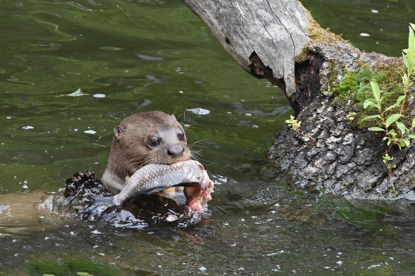 Rybička k obědu