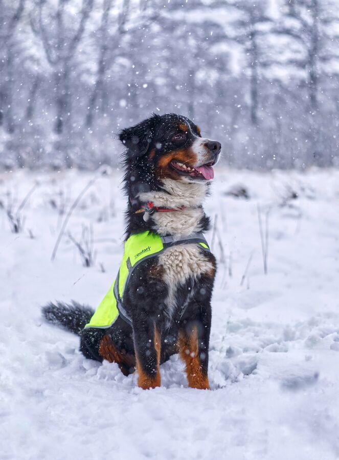 Hrdý lavinový pes:-)