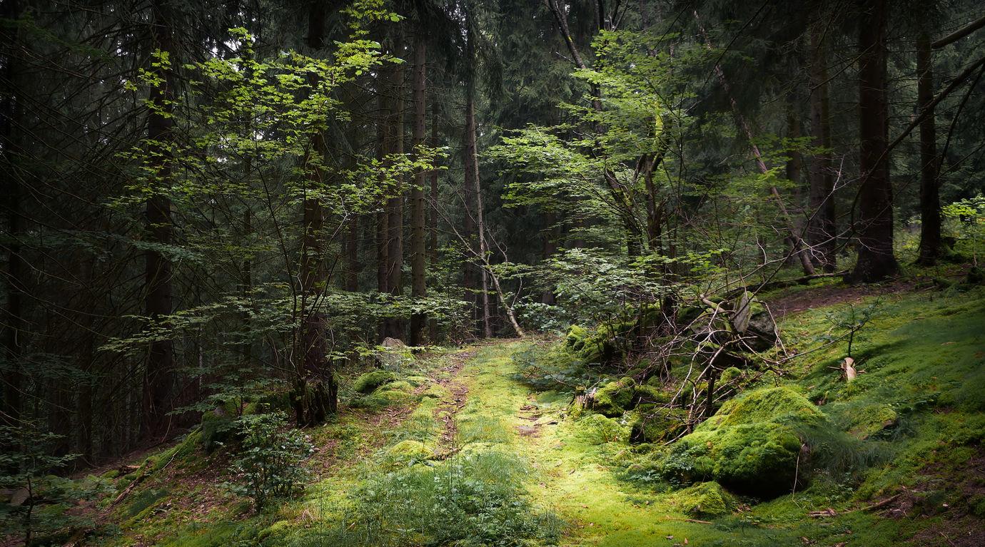 Krušnohorský les