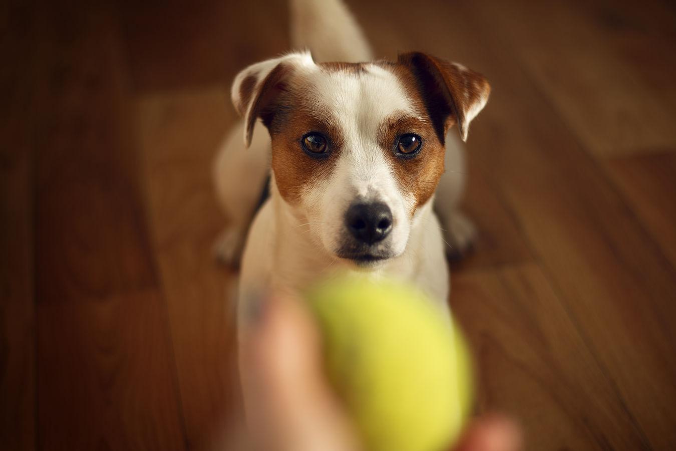 Chceš si hrát?