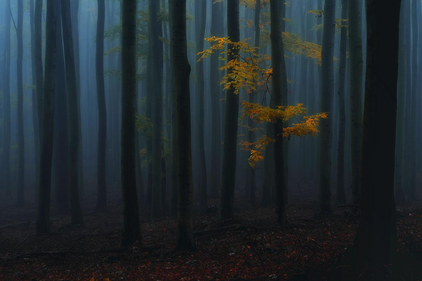 Podzimní nálada v lese