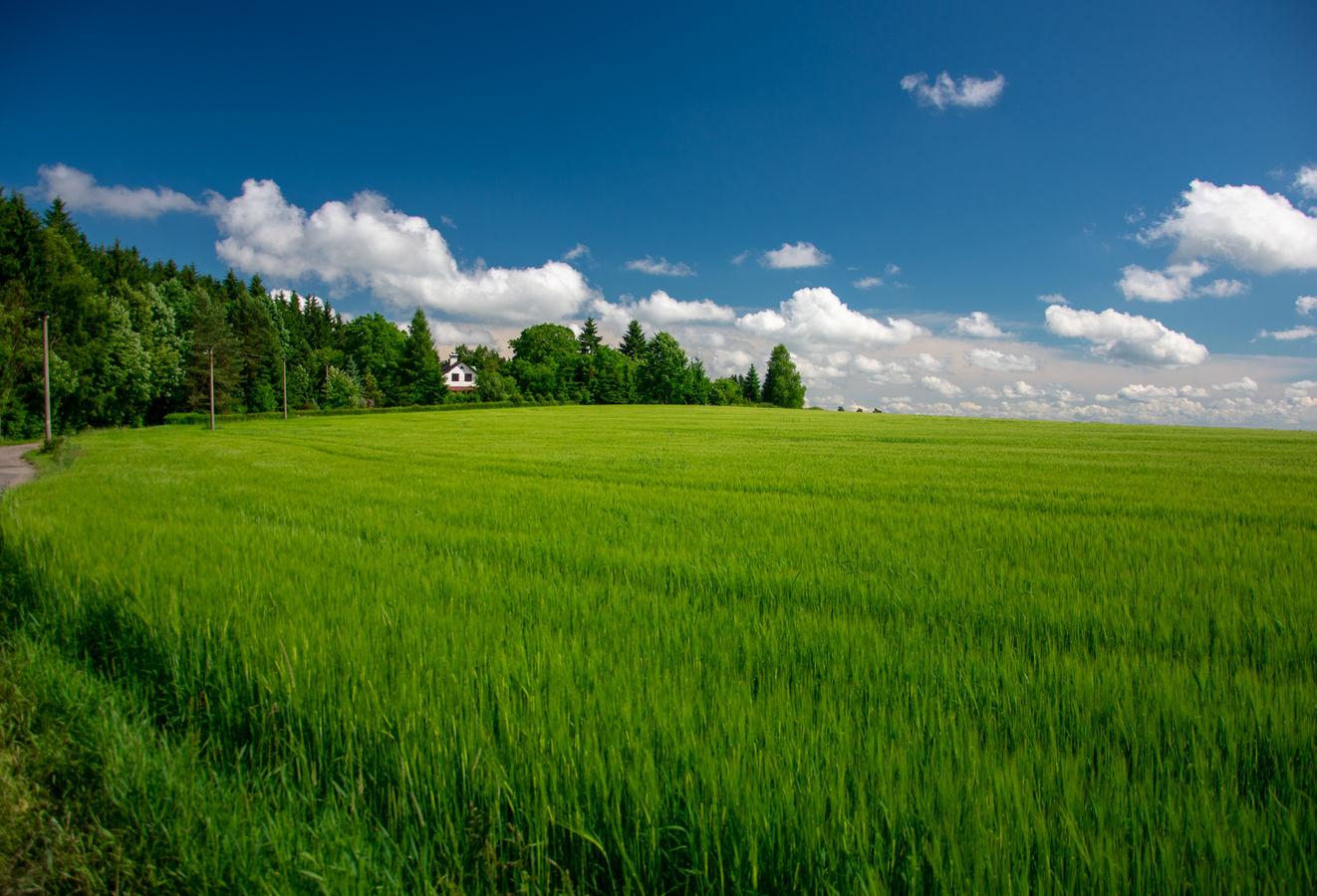 Na samotě u pole