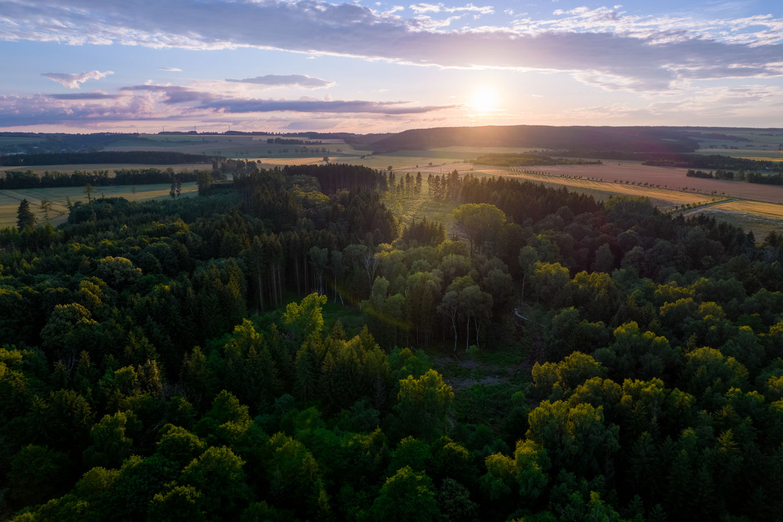 Les s mýtinkou