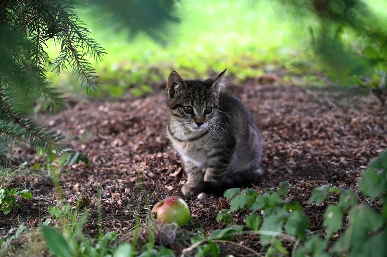 Zátiší s kotětem