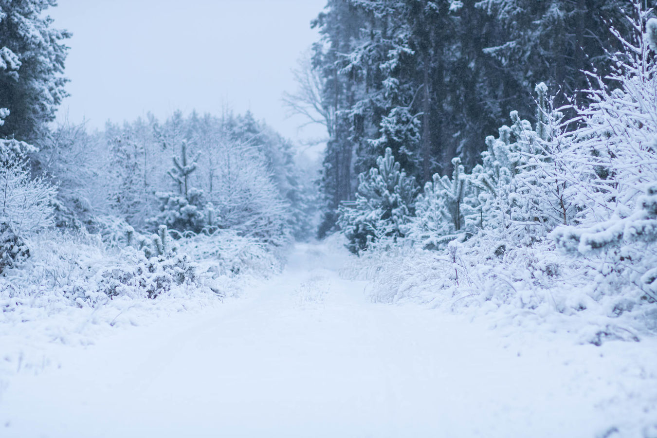 Tím směrem prý bych se dávno měl dát když sněží, jde to stěží, ale sněhy pak tají kus něhy ti za nehty slíbí a dají
