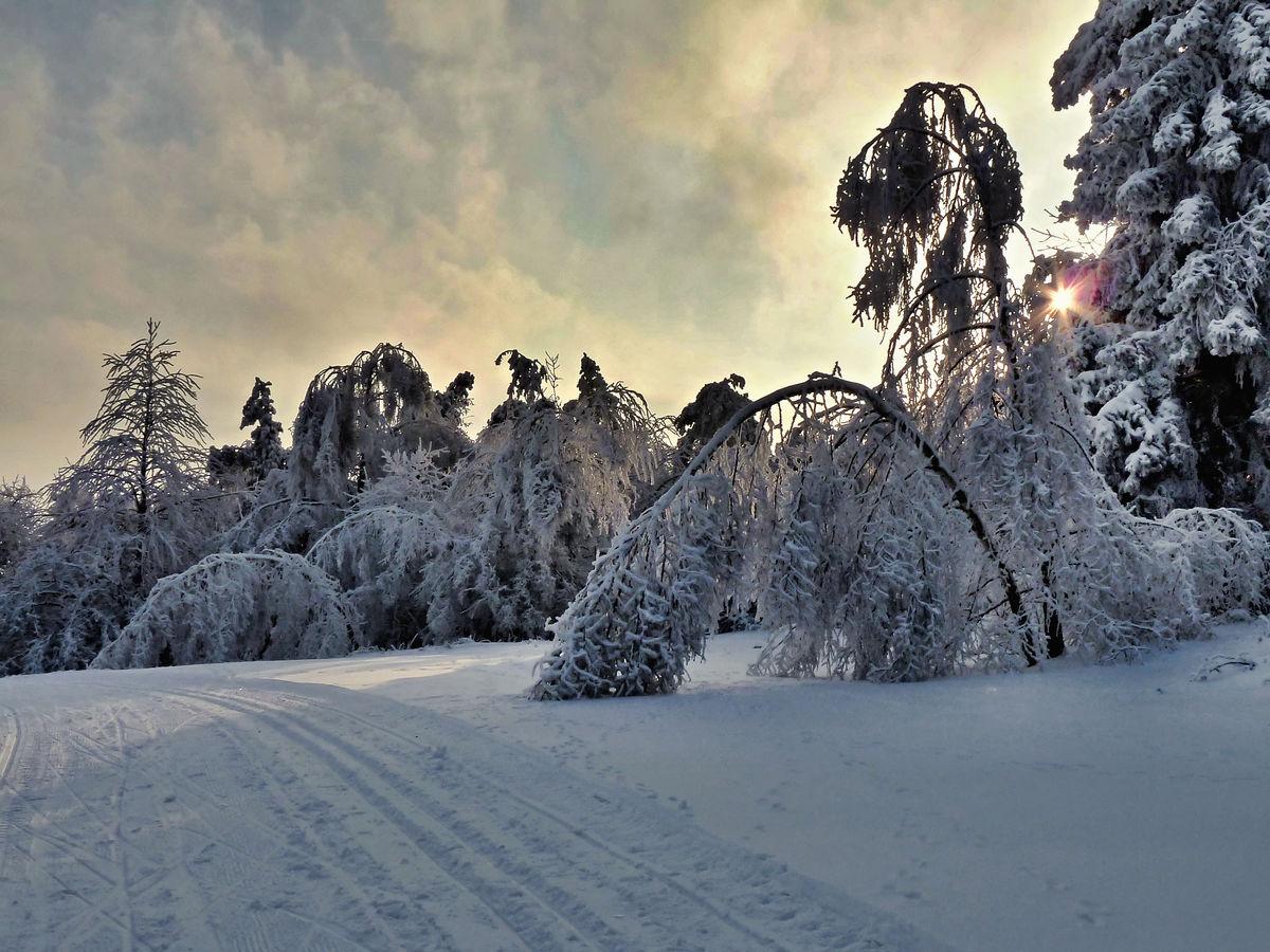 Nemilosrdná zima