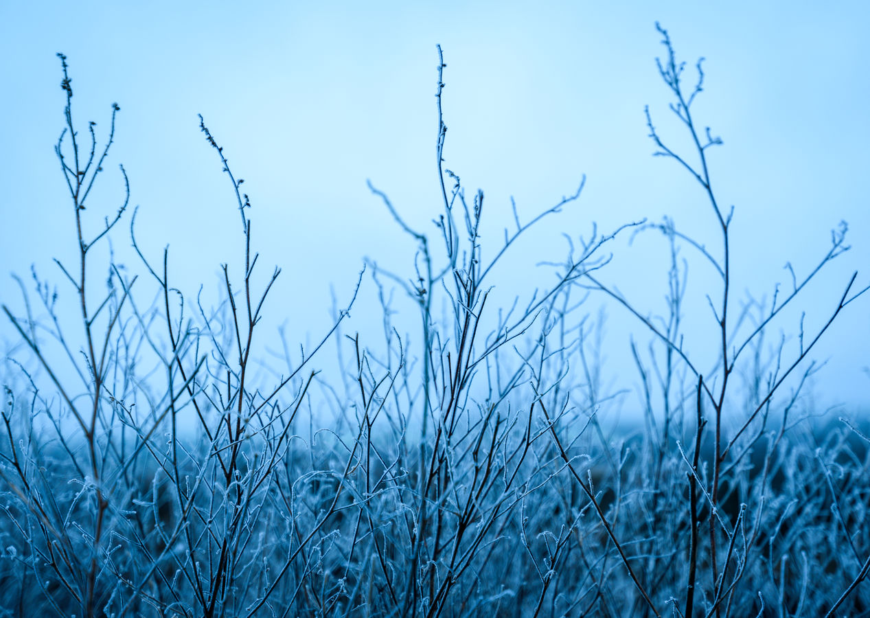 NeLadovska zima