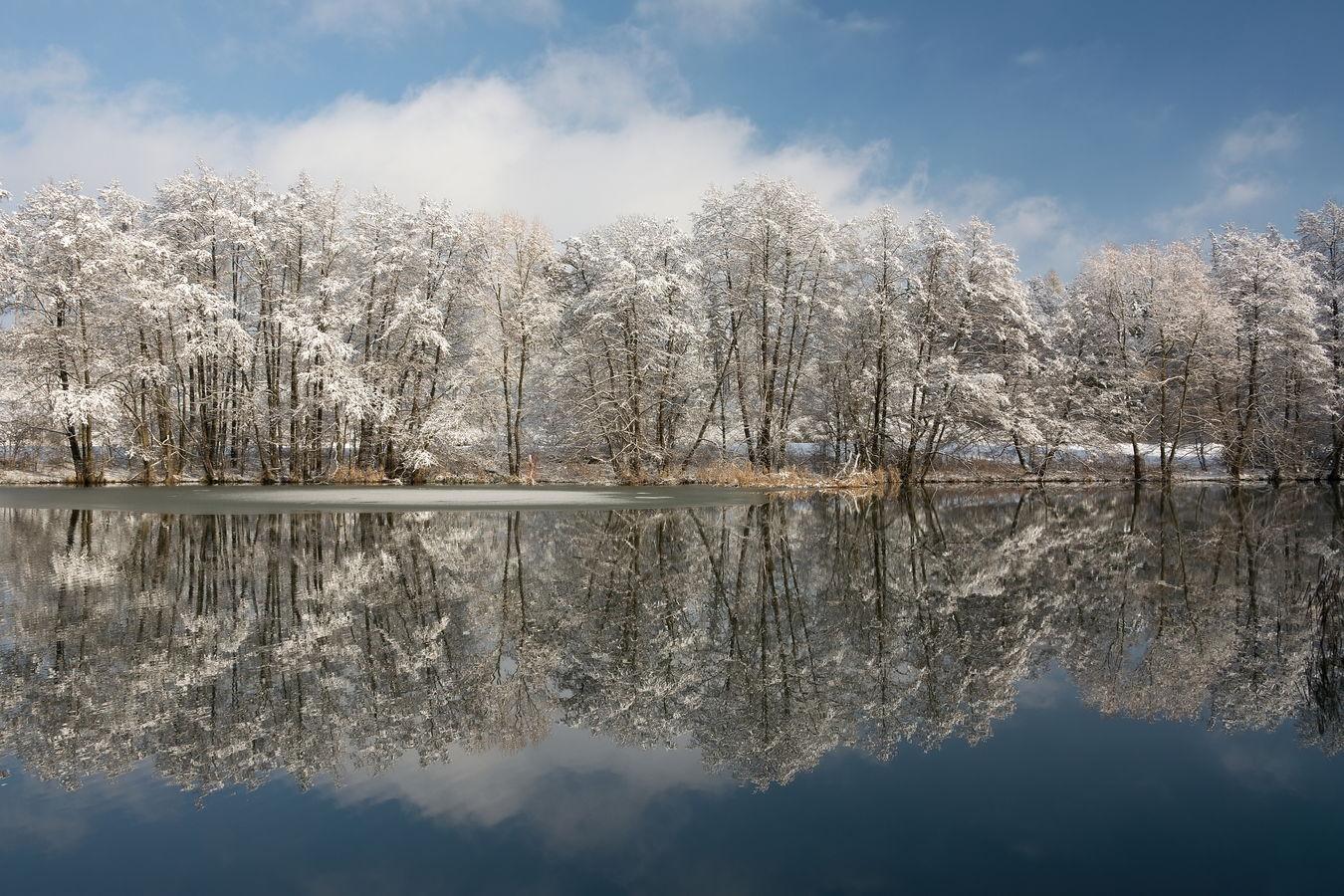 Dubový rybník