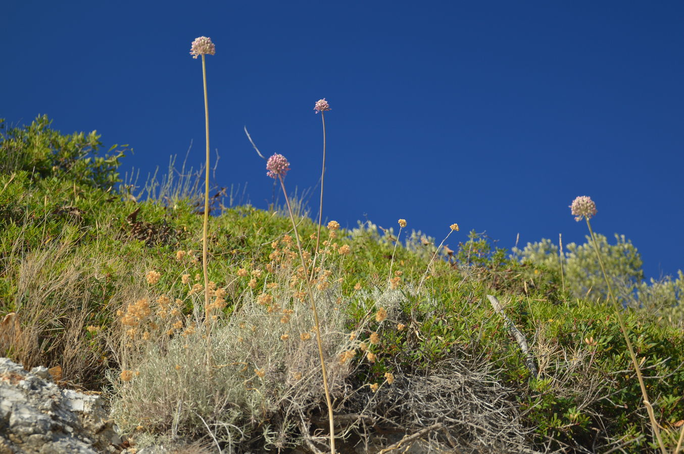 Přímořská květena