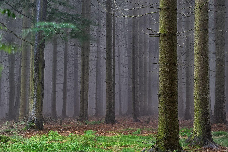 Mlhavo v lese