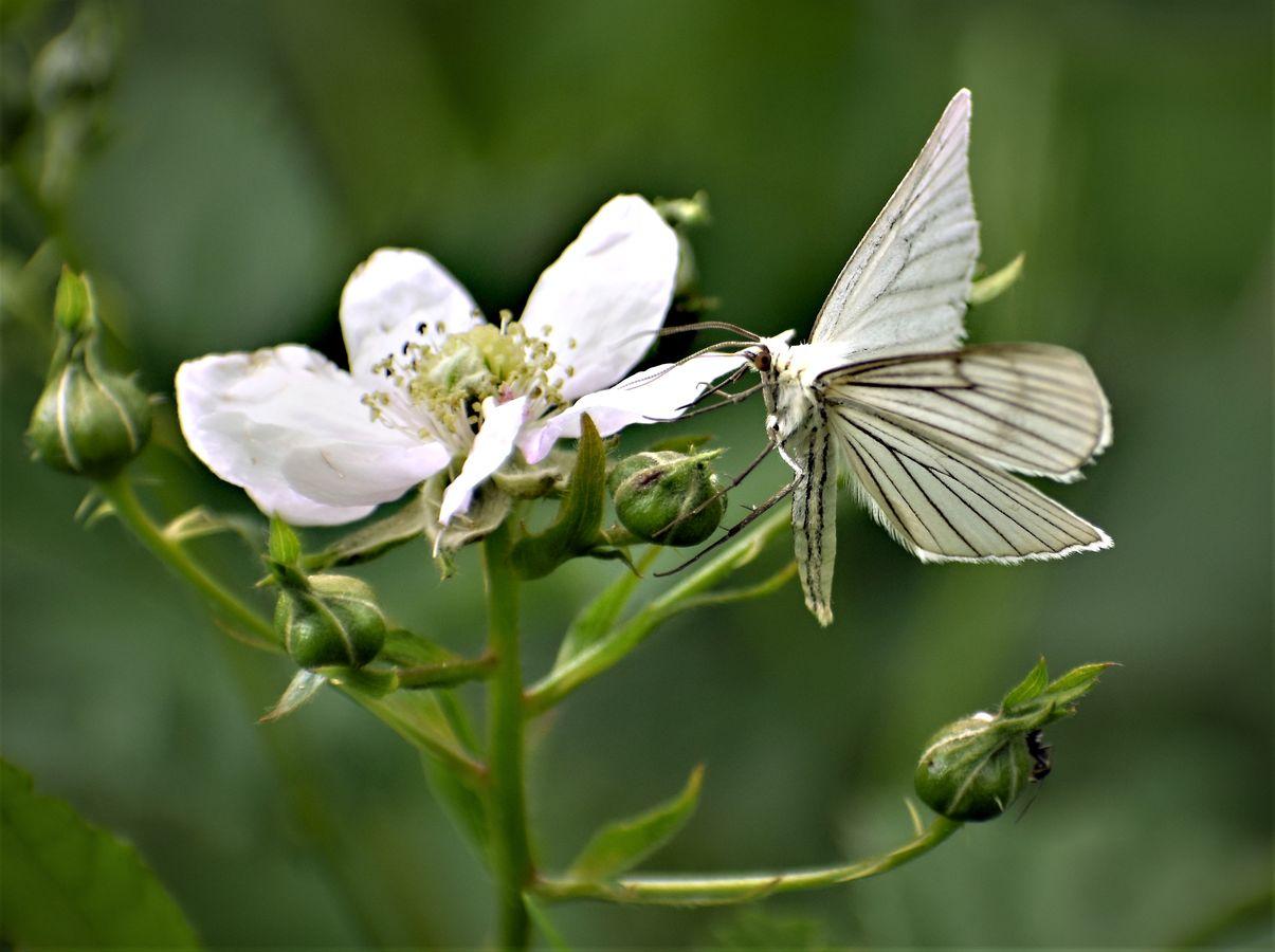 Motýlí ochutnávka