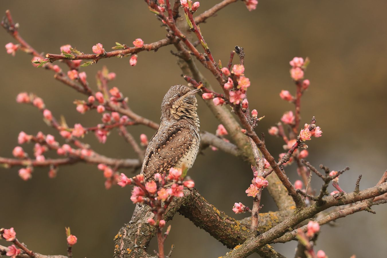 Jarní květy s krůťou -:)