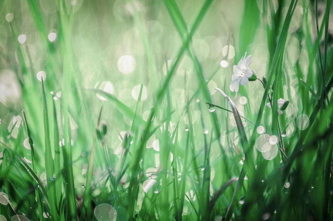 Ráno v trávě.