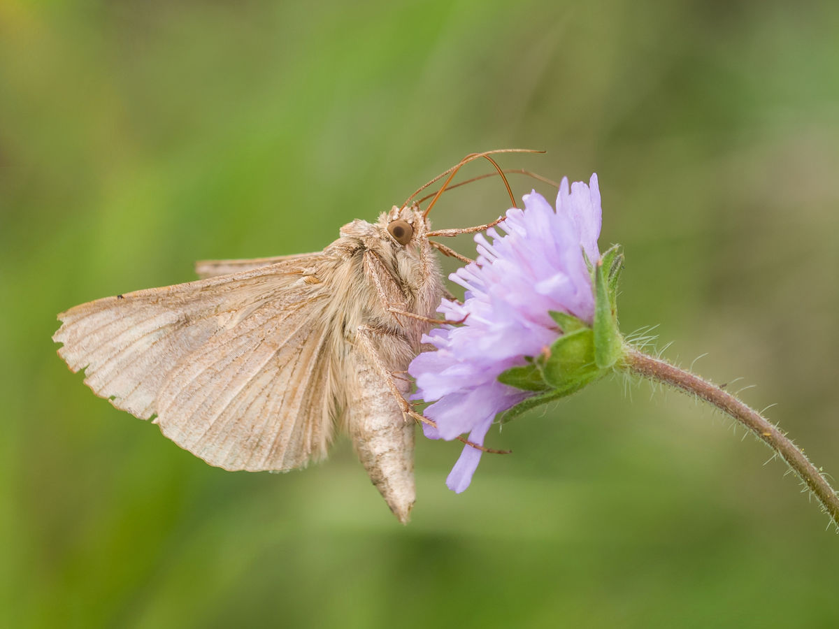 motýlek ( ale bohužel nepodařilo se nám zjistit  název )